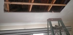 Mold Growth In Ceiling